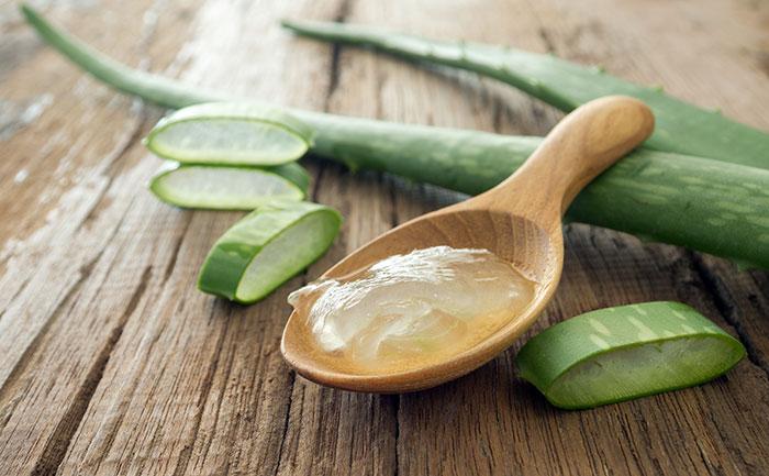 Aloe – Heilmittel im Blumentopf. Eigenschaften und Verwendung