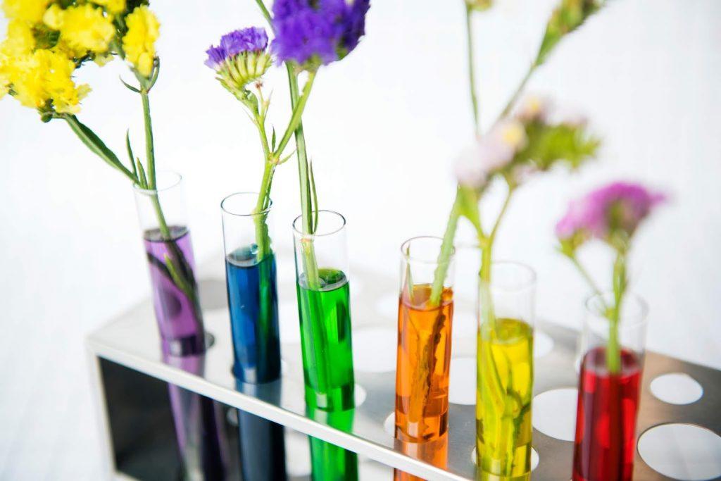 Natürliche Pflege – Pflanzen, die für Ihre Schönheit sorgen!